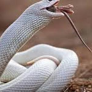 تفسير رؤيه الحيه والأفعى فى المنام بالتفصيل Snake