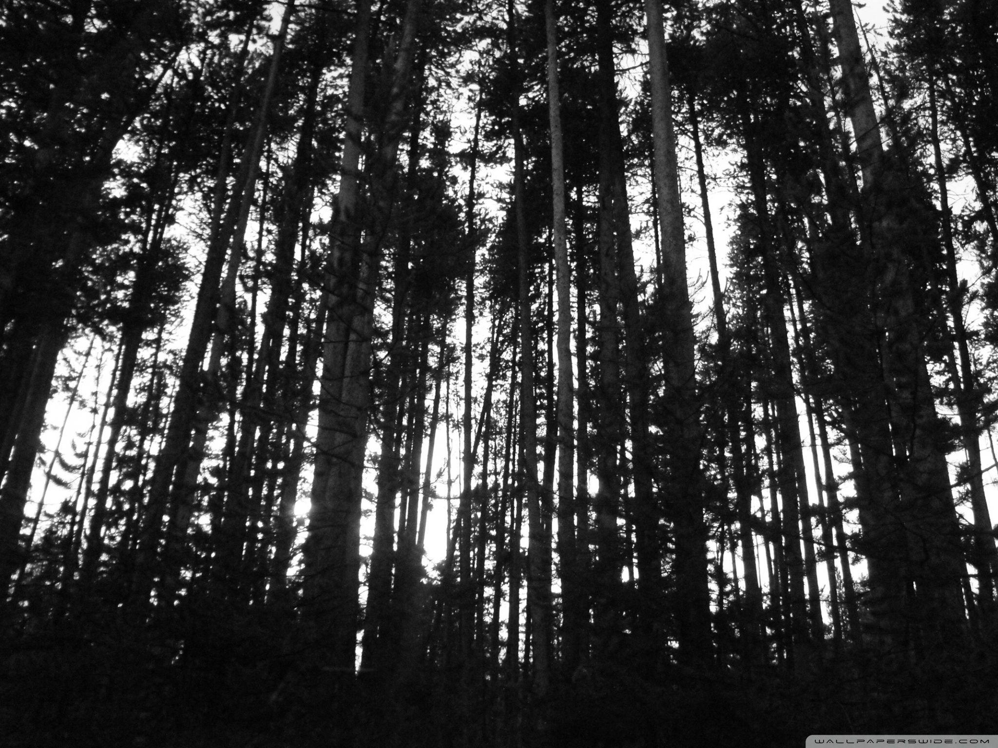 Pin By Beth Maddox On Shadows At Play Black And White Tree White Tree Black Tree