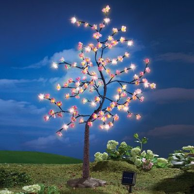 40 Collections Solar Pink Cherry Blossom Tree Cherry Blossom Tree Garden Trees Cherry Blossom