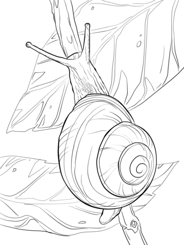 White Lipped Snail Coloring page | Colouring Pages | Pinterest ...