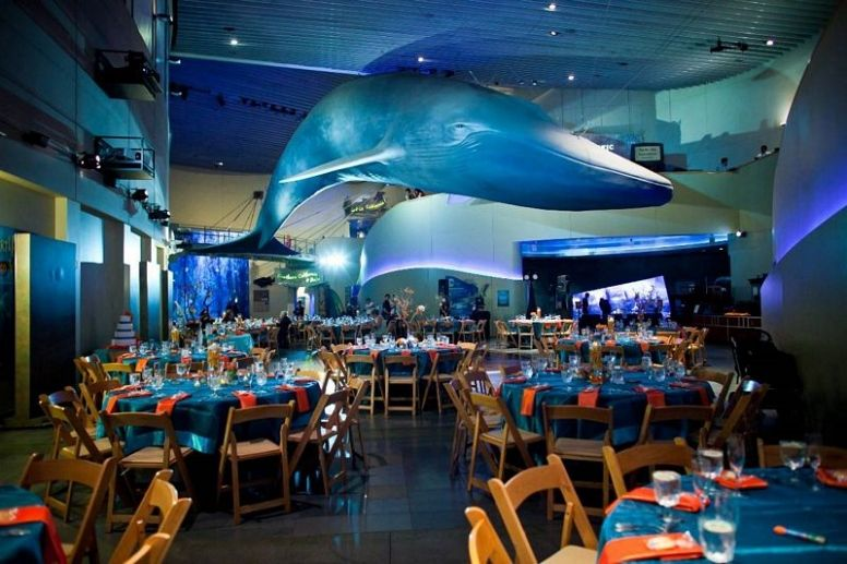 Aquarium Of The Pacific Pd Special Events Long Beach Wedding Cost
