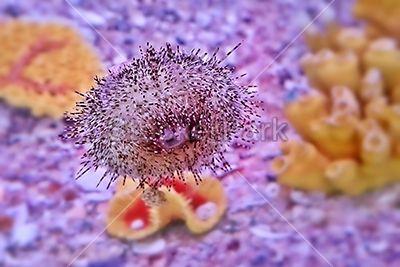 Sea Urchin | Photo | StockerPark