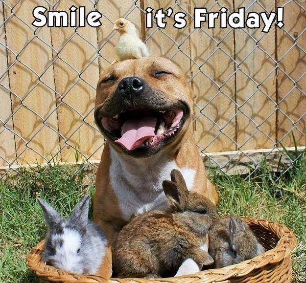 Smile it's Friday quotes quote dog friday happy friday ...