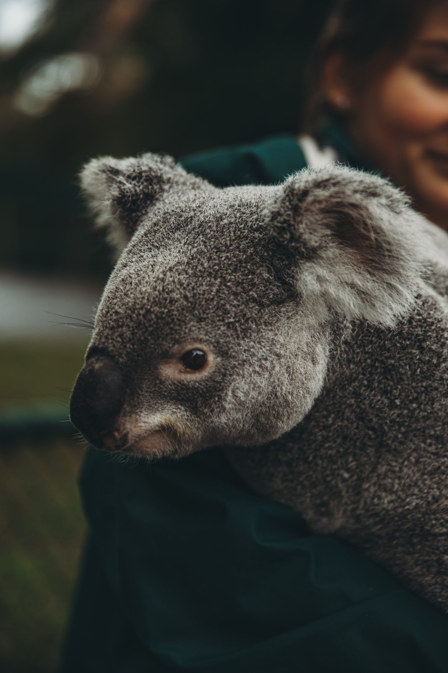 Australia Zoo Wildlife Hospital Animal Experiences Animals Zoo