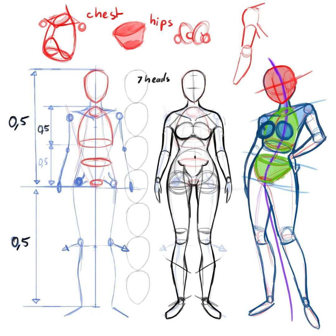 Studying anatomy I learned from thtorials from Rad Sechrist, so I ...