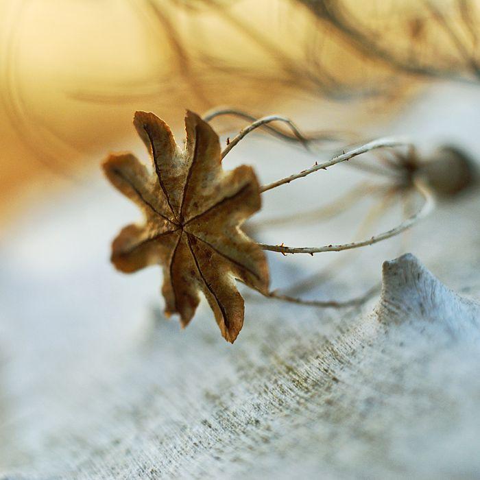 (*), photography by Danuta Turkiewicz