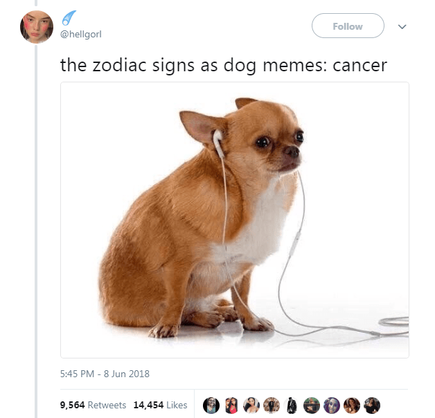 The 12 Zodiac Signs As Dog Memes Dog Memes Zodiac Signs Funny Zodiac