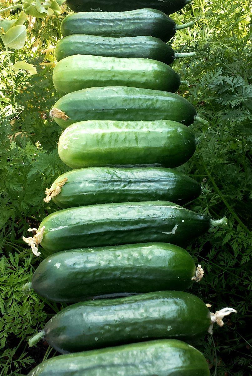 Wenig Platz Viel Gemuse In 2020 Hydrokultur Garten Schattenpflanzen Garten Gemusebeet