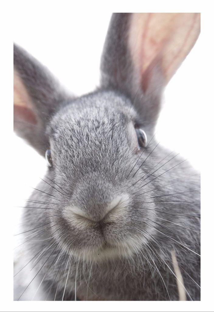 cfb40dc7 Hvad jeg ønsker mig til min fødselsdag | Posters | Poster, Rabbit