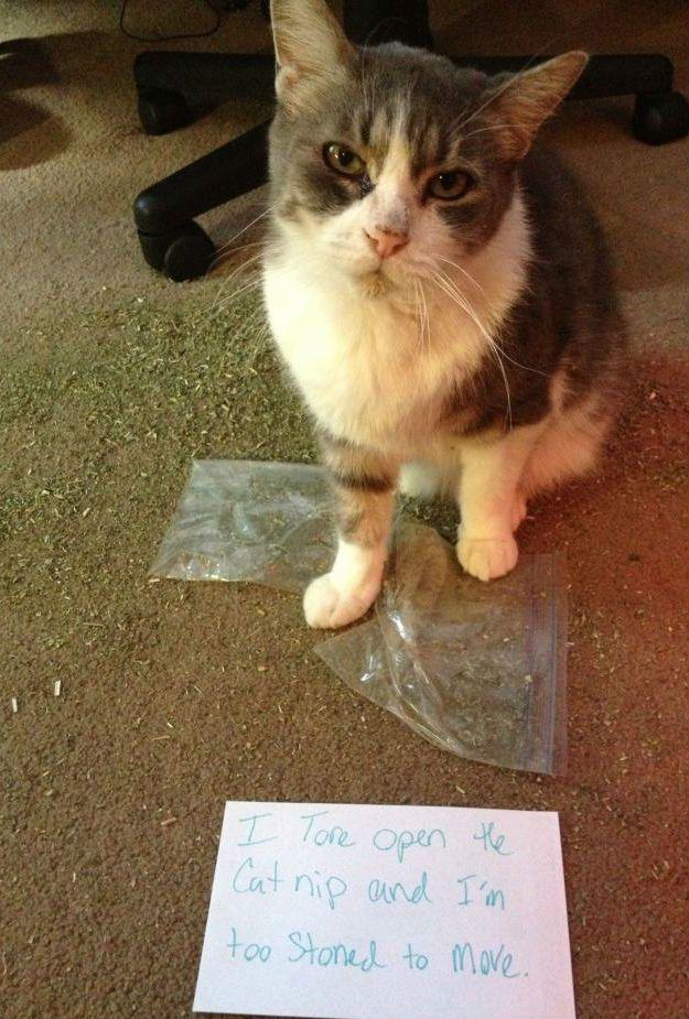 Cat Shaming Animal Shaming Cat Shaming Funny Animals