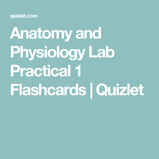 Anatomy and Physiology Lab Practical 1 Flashcards | Quizlet ...