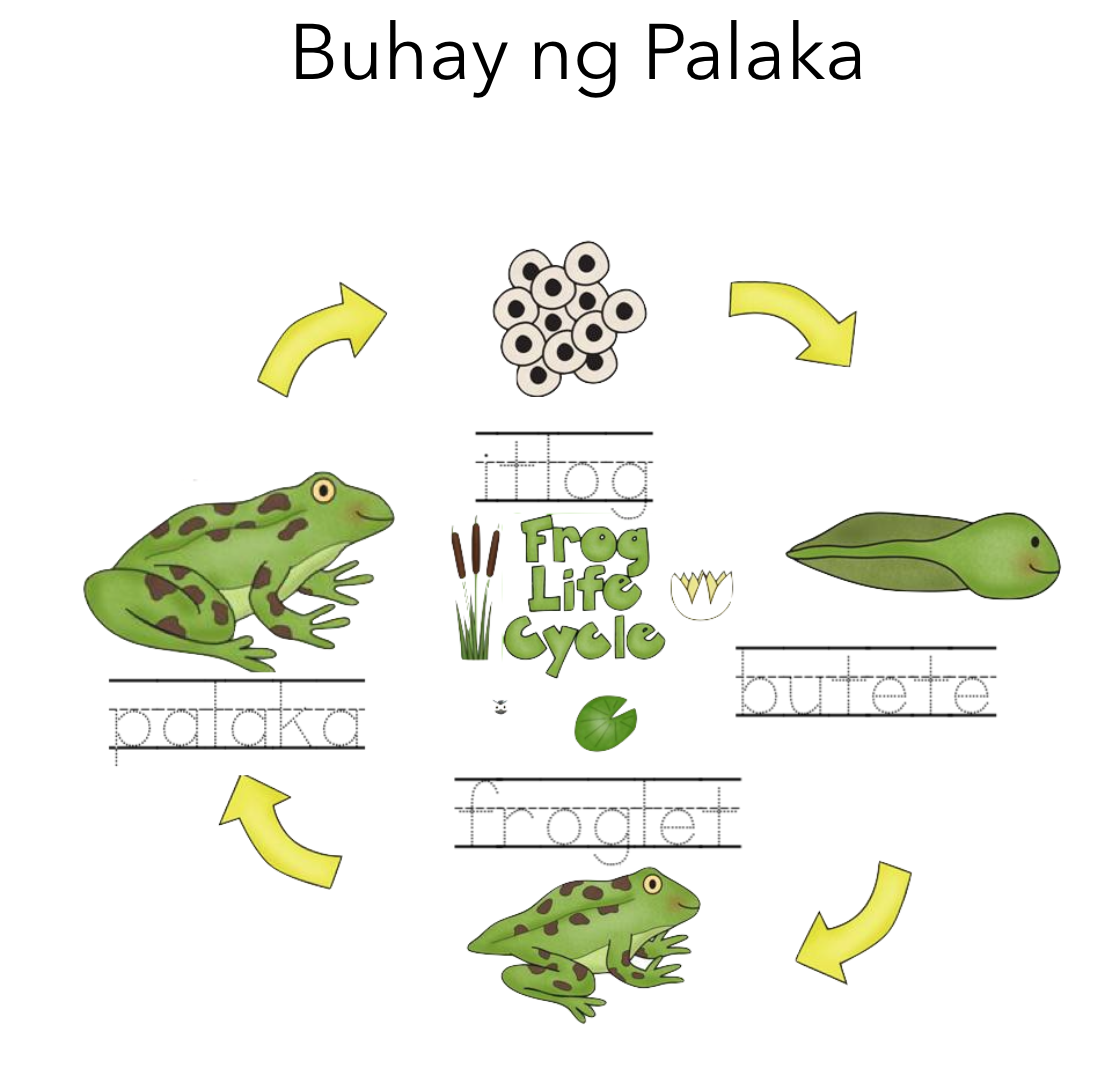 Learn The Life Cycle Of A Frog In Filipino By Writing The