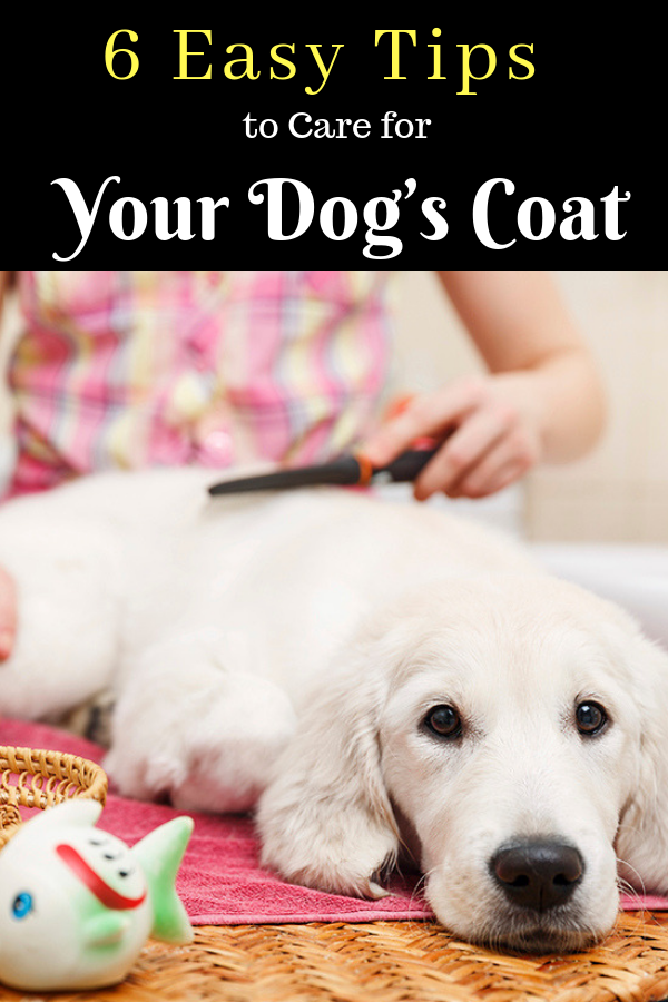 6 Easy Tips To Care For Your Dog S Coat Dogs Your Dog Dog Coats
