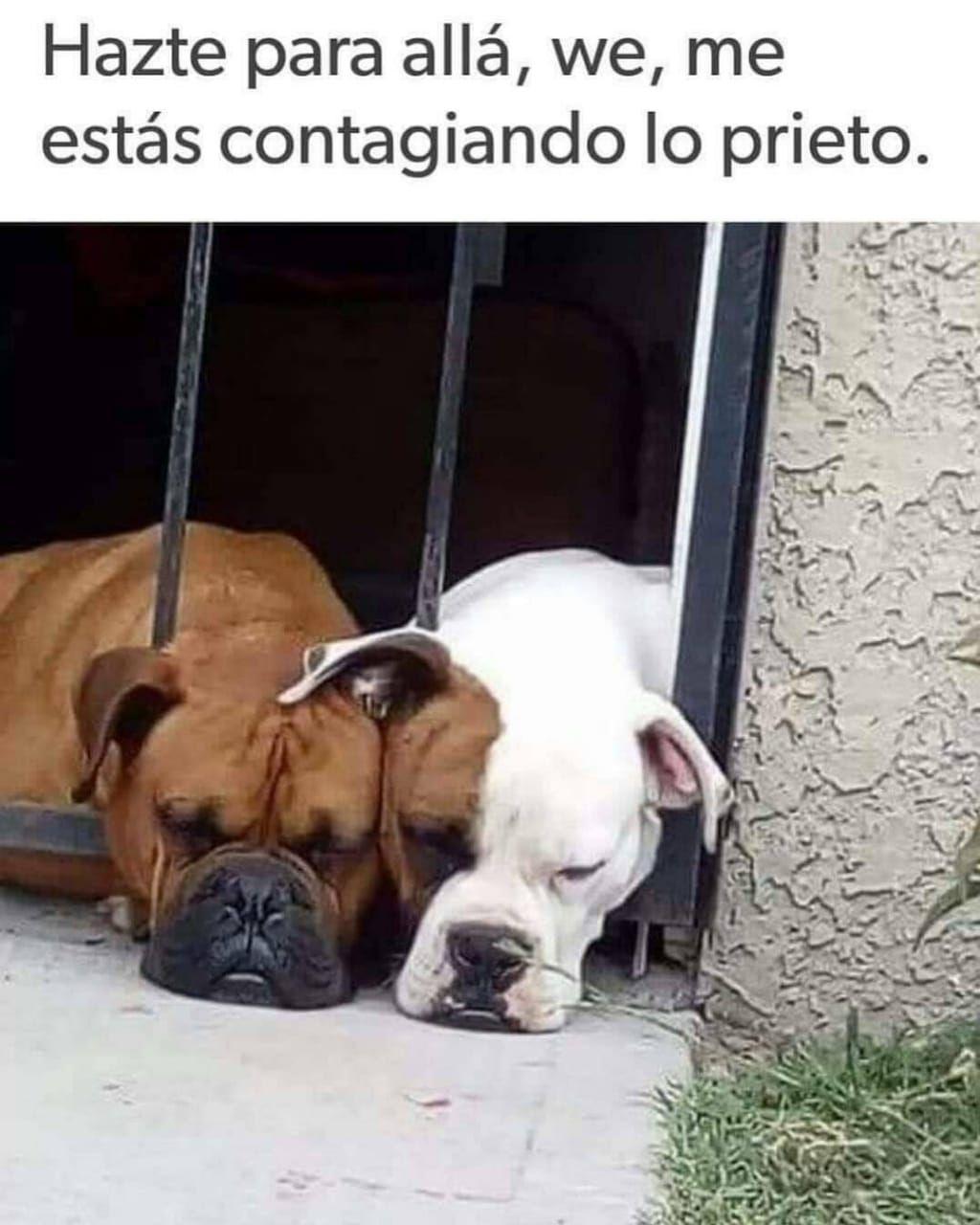 Memes Del Firulais Memes En Espanol La Mejor Recopilacion De Memes Lo Mas Viral De Internet Humor Divertido Sobre Animales Memes Divertidos Memes