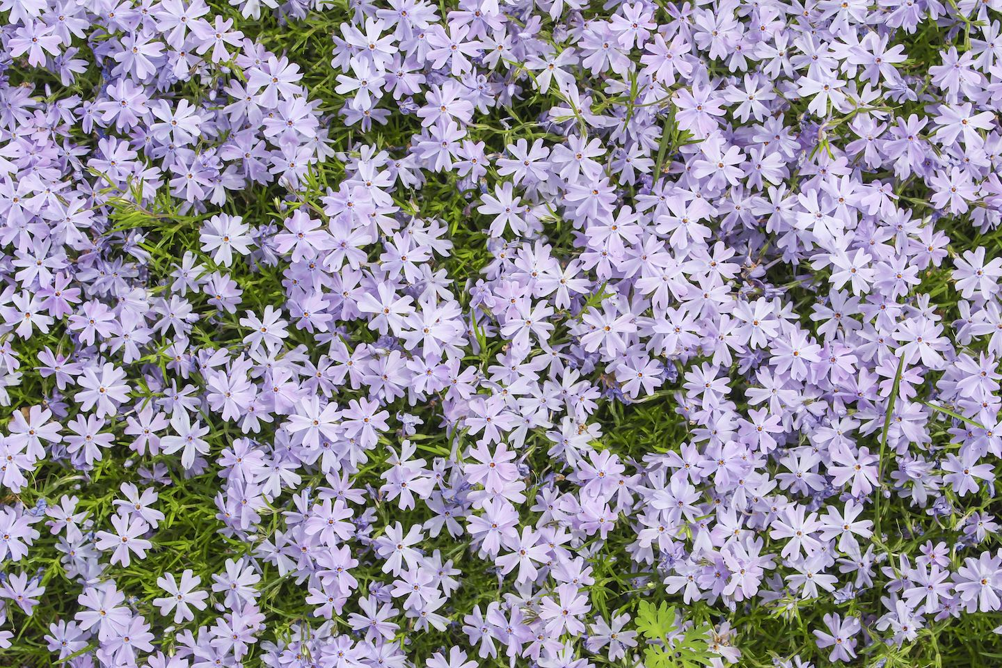 21 hardy easy perennials to plant in canada easy