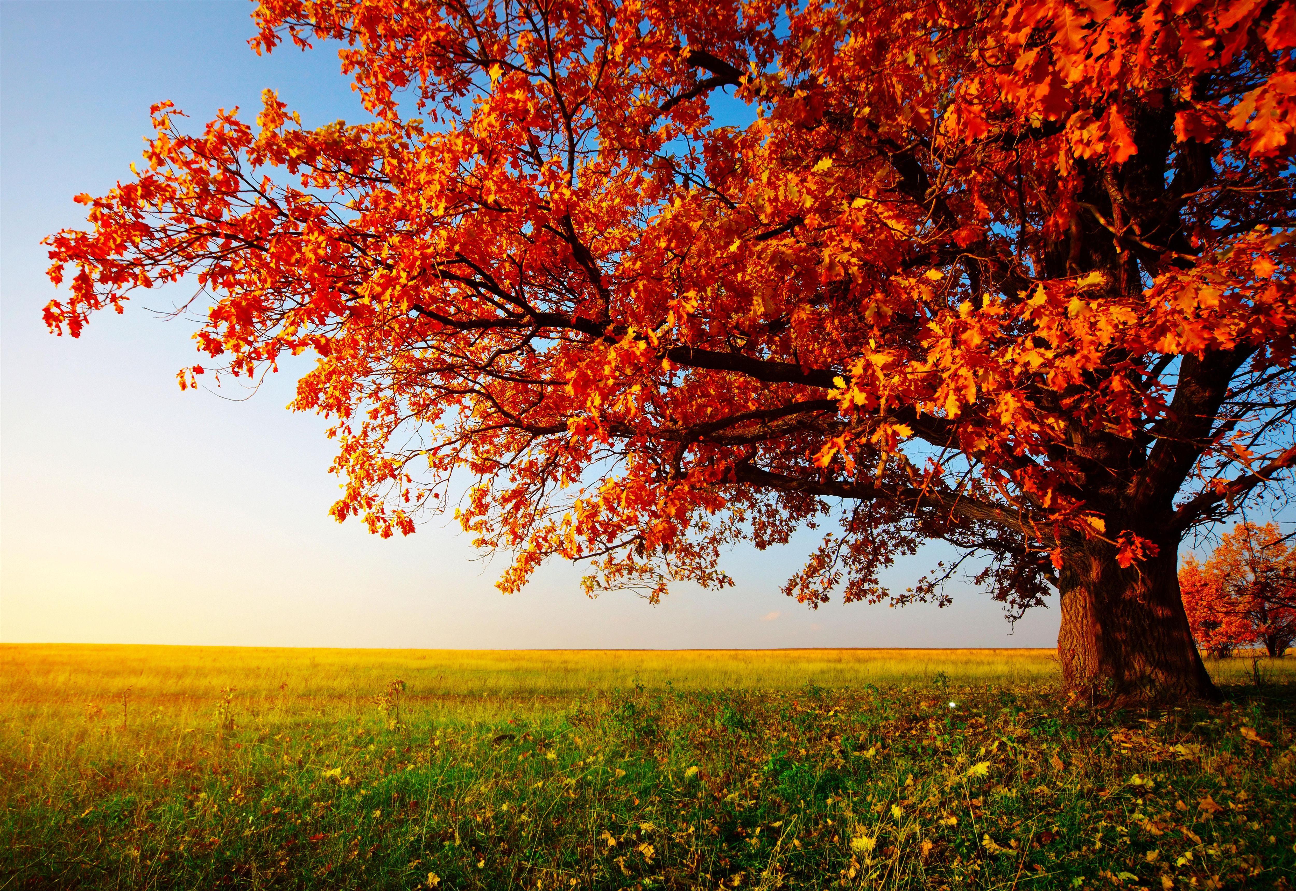 autumn fall tree backgrounds - photo #6