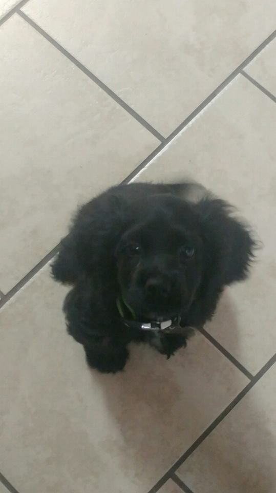 Welcome Cap, to our Dog Training In Your Home family! We can't wait to start training this cutie :-)