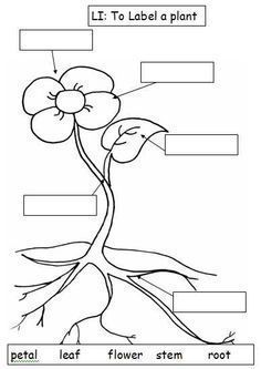 Black And White Plant Parts Diagram Sketch Coloring Page#