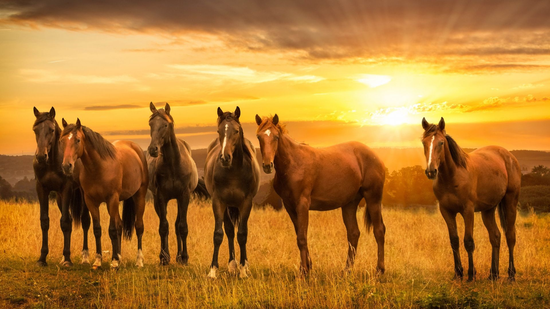 Pin By Silvia V D E On Pferde Pictures With Horses Horses Beautiful Horses