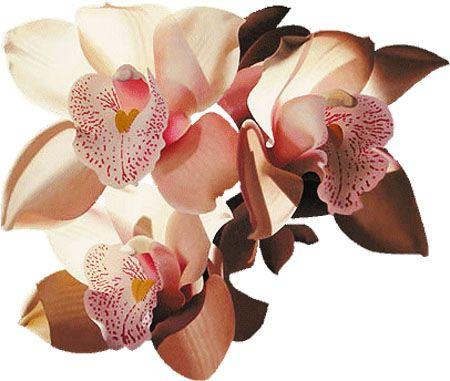 Orhideae