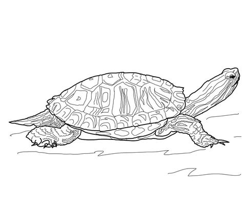 Hand Drawn Nature Coloring Pages Turtle Coloring Pages Flower