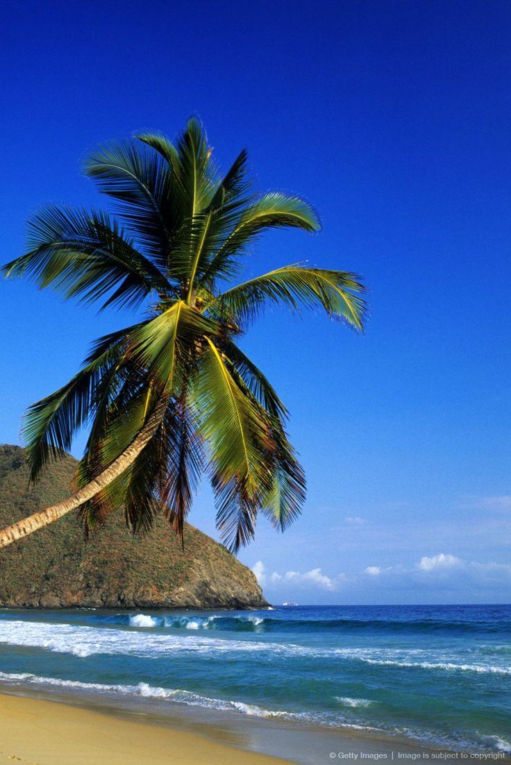 Venezuela, Aragua State, Henri Pittier National park, Choroni, beach and coconut trees.