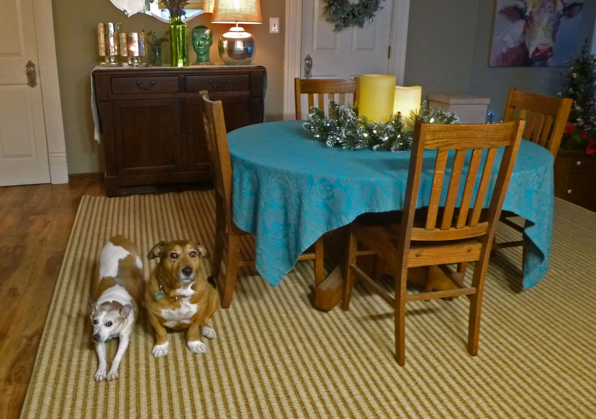 Missy and Poppy on their new Smith and Hawken rug from Target.   http://www.target.com/p/patio-rug-hickory-stripe-smith-hawken/-/A-50785590