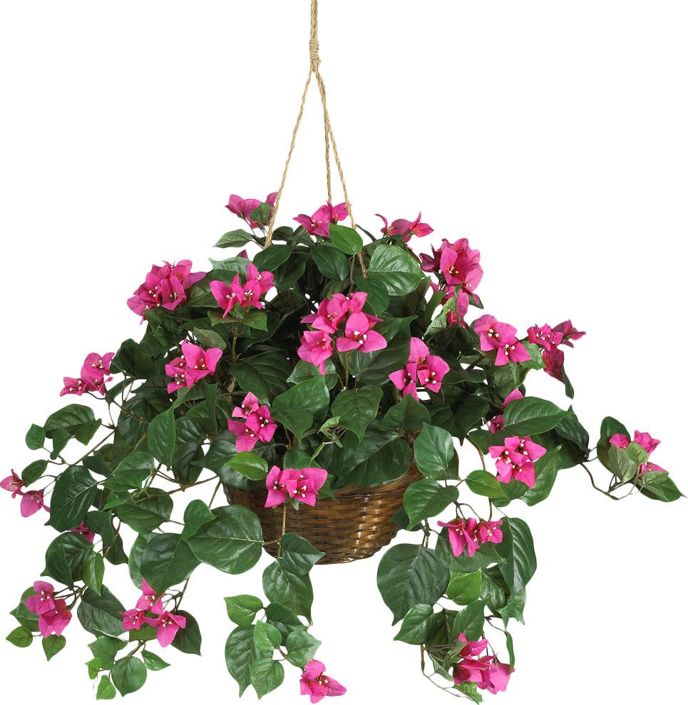 Bougainvillea überwintern Silk Bougainvillea In Basket Bougainvillea And Products
