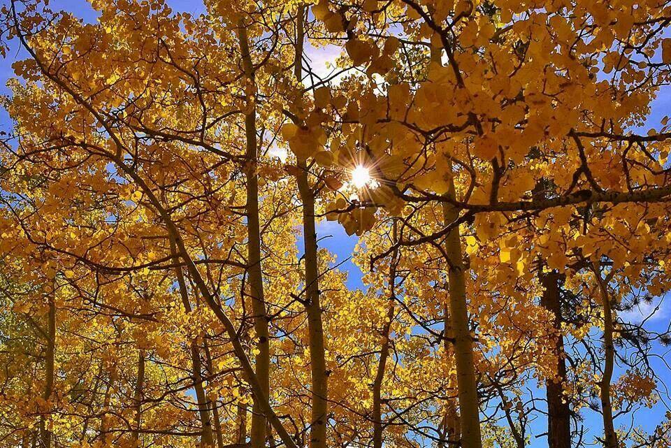 My favorite season..... | Outdoor living, Outdoor, Seasons on Seasons Outdoor Living id=98688
