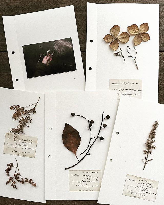 Reconocimiento De Plantas Dibujos Botanicos Flores Secas Flores Prensadas