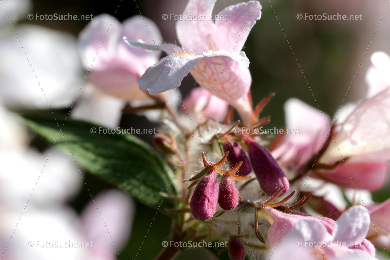 Blüten Sakura Blumen Frühling