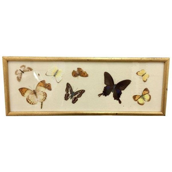 Vintage Gold Framed Butterfly Art 40 Liked On Polyvore Gorgeous Butterfly Home Decor Accessories