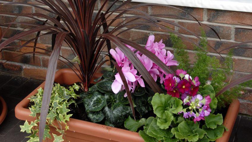 Composici n en jardineras de exterior con dr cenas y for Jardineria exterior con guijarros