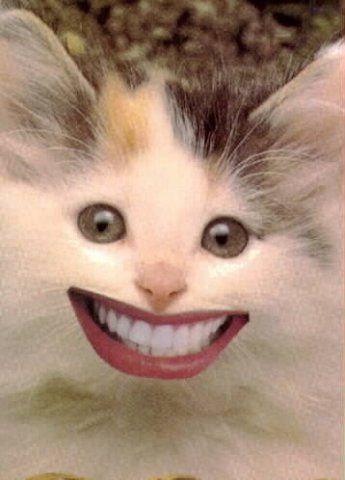 Smiling Face Meme : smiling, Smiles, Smile...it, Increases, Value, Funny, Animals,, Cats,, Smiling