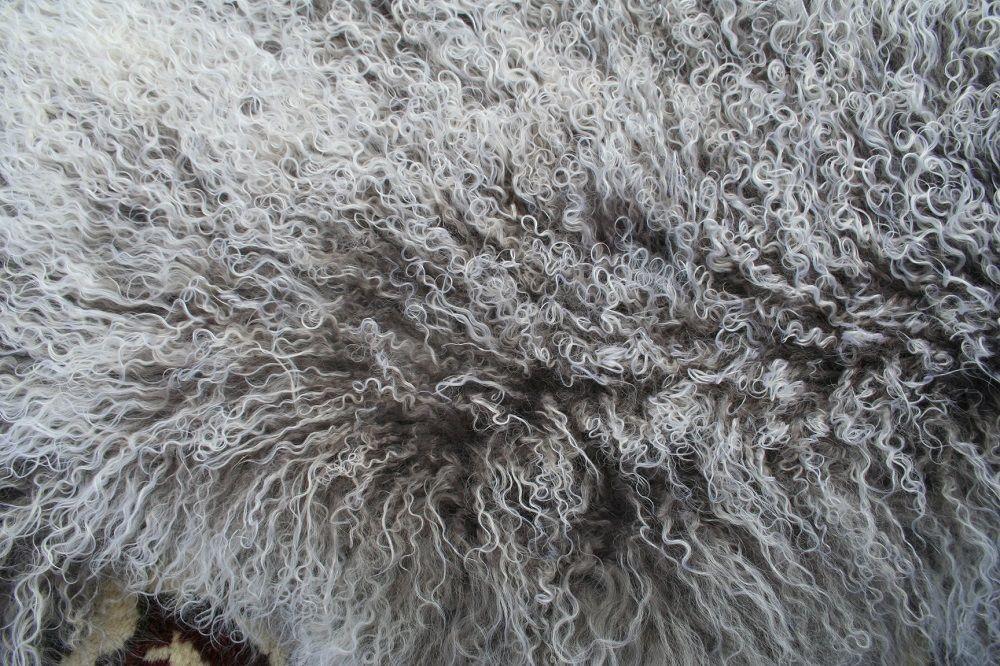 Grå vit Tibetanskt fäll