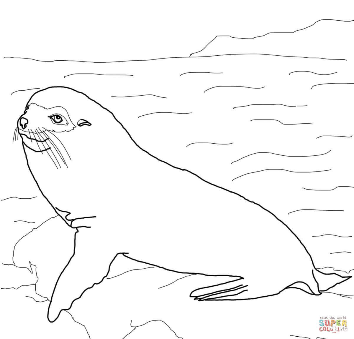 Dibujo De Lobo Peletero De Las Galapagos Para Colorear