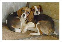 Rspca Victoria Breakingnews28may2015 Animals Pet Adoption Puppies