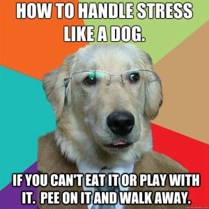 7e0e259d3e33a649853c2ebf17833951 how to handle stress like a dog isabels pretty pictures