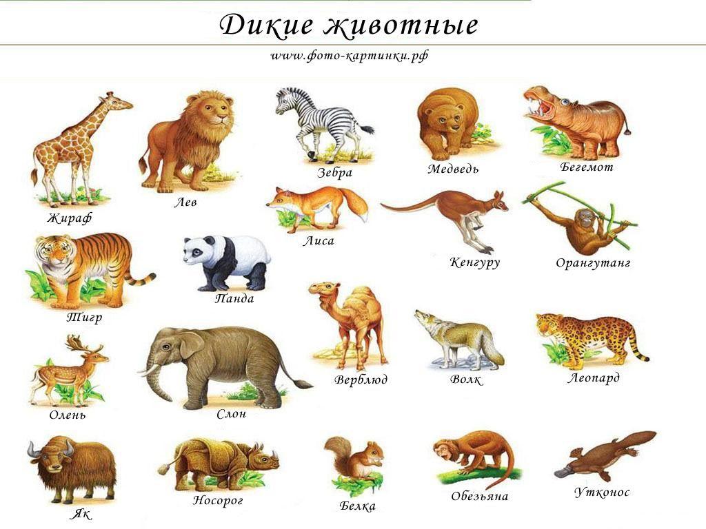 Картинки дикие животные для детей | Дети, Язык и Животные