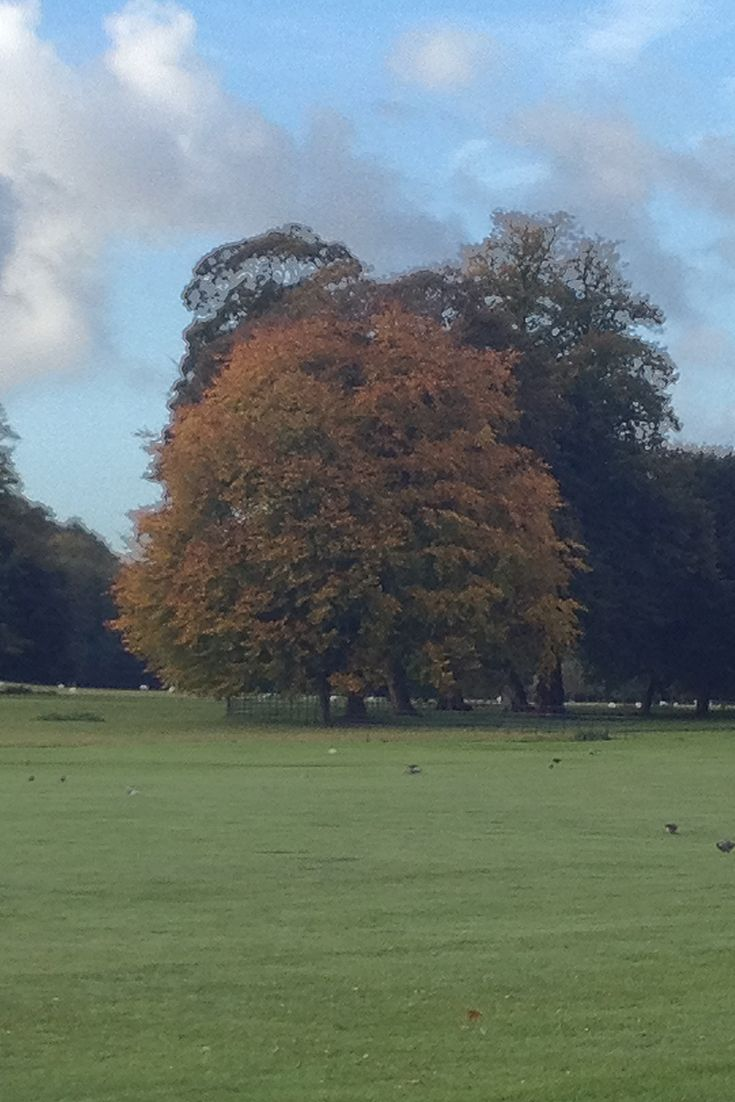 Autumn leaves on the front lawn at West Dean.