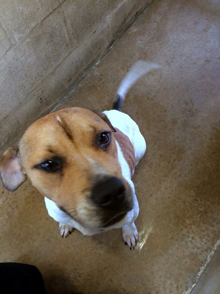 "#Founddog 6-11-14 STRAY #Satsuma #FL ID# 1378 ""Jenny"" Female #Pitbull mix N 1st St  PCSO ANIMAL SERVICES https://m.facebook.com/story.php?story_fbid=723526224376933&substory_index=0&id=519613888101502"