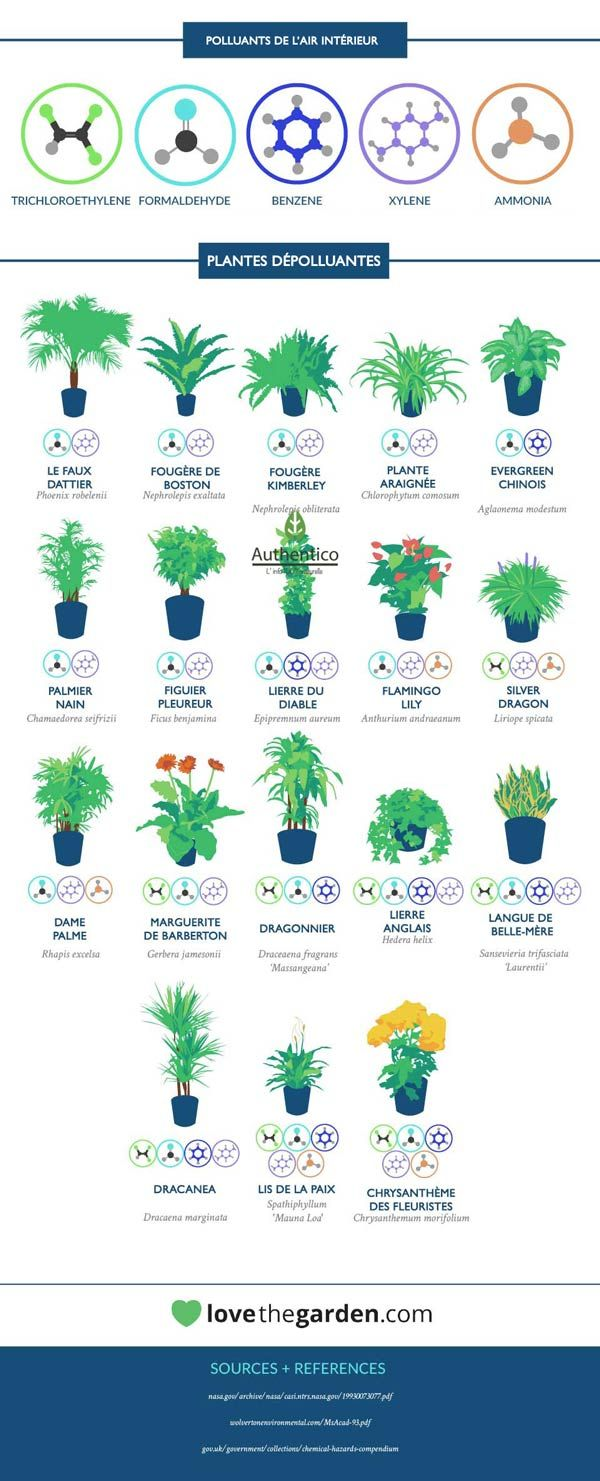 18 Plantes Depolluantes De Votre Maison Selon La Nasa Plantes Depolluantes Plante Plante Verte