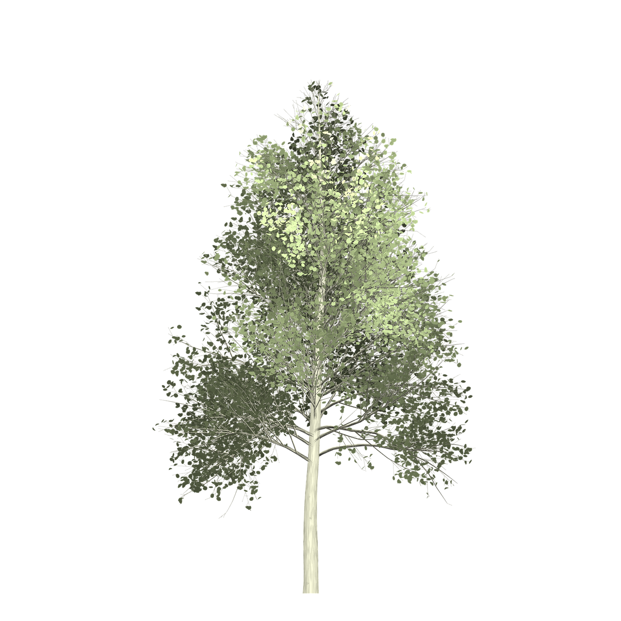 Forest Aspen Tree Painted Tree Nature Green Forest Aspen Tree Paintedtree Nature Green Aspen Trees Autumn Trees Tree Painting