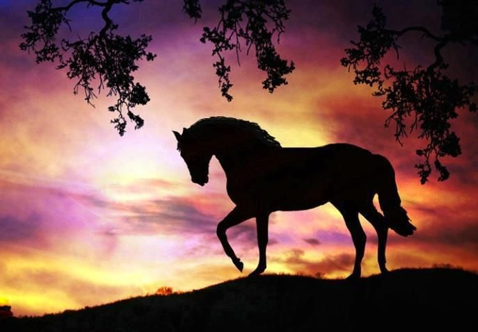 12 Lo Mas Hermoso En Imagenes Sillouettepainting Shadowpainting Paintingprints Horsesilhouette Runningsi In 2020 Horse Silhouette Horses Beautiful Horse Pictures