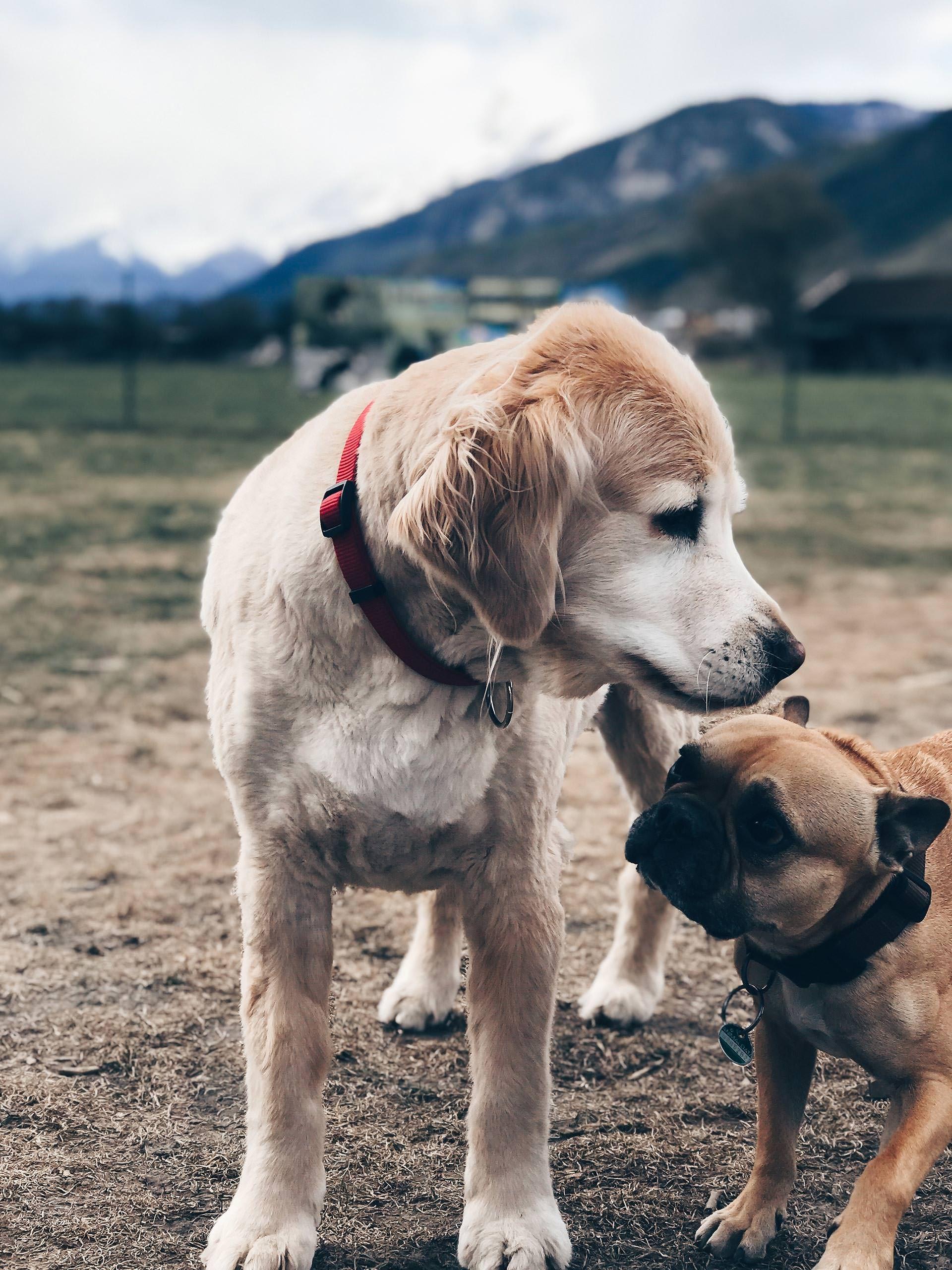Die Hunde Netiquette Regeln Fur Hundehalter Und Ein Angenehmes