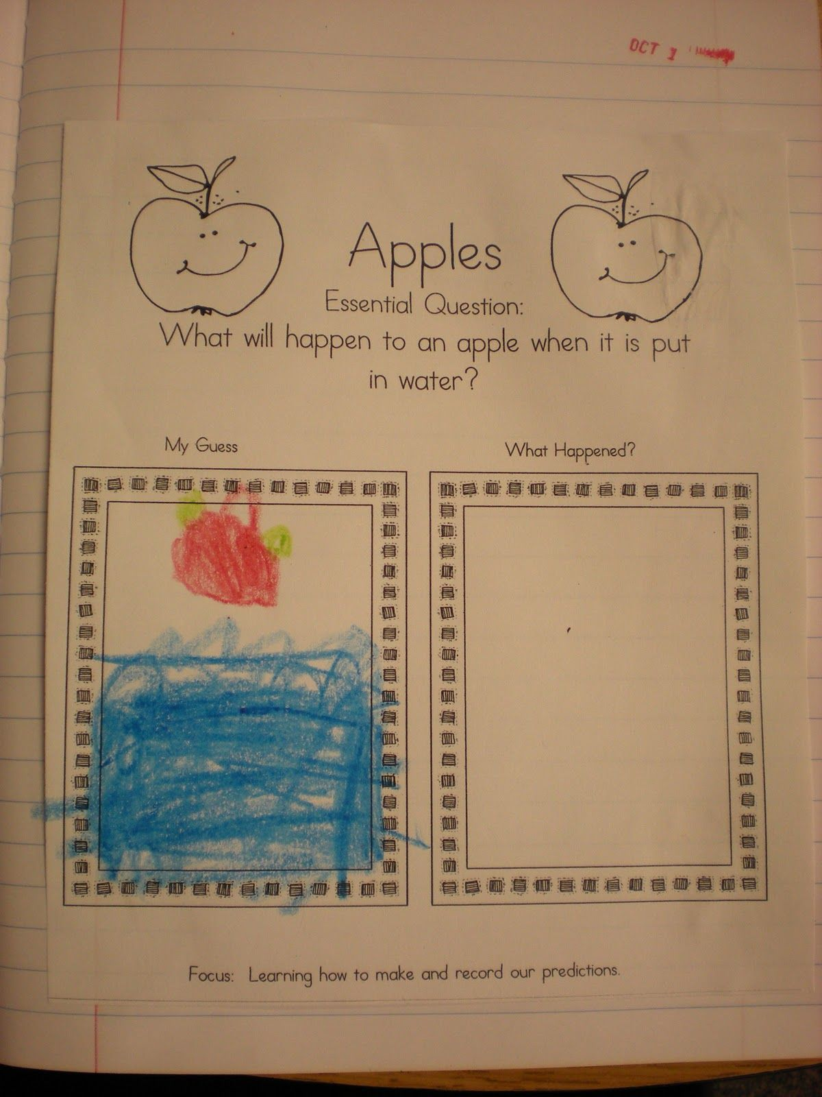 Apple Sink And Float Activity