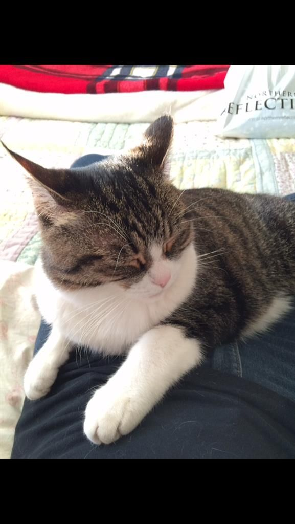 Lost Cat Female London On Canada N5z 5a7 Lost Cat