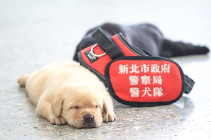 This Police Force Announced Its Latest Recruits And They Are So - The internet cant get enough of the taiwan police forces newest k9 recruits