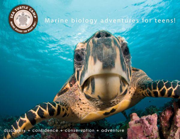 Marine Biology Camp, Marine Science Summer Camp Teens - Sea Turtle - marine biologist job description