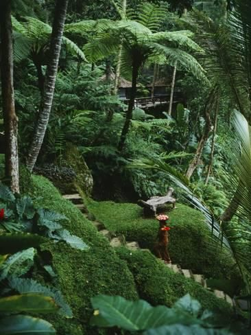Photographic Print: A Resort Worker Walks up the Steps of a Path Cut Through Dense Jungle : 16x12in